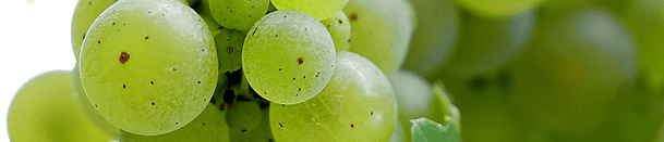 raisin blanc lanzarote