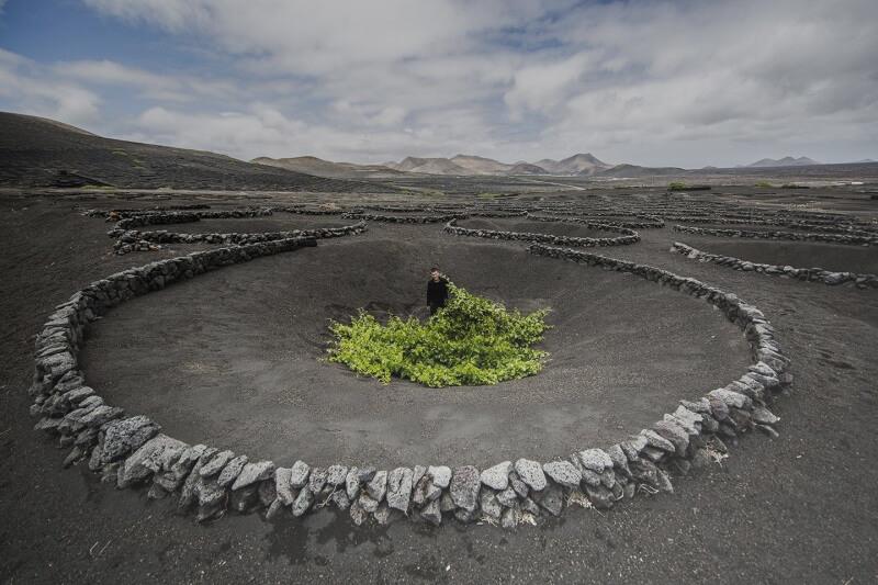 la geria vigne volcan lanzarote